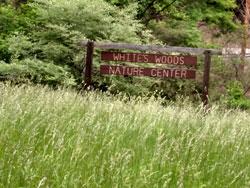 whites woods park
